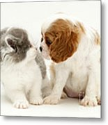 Dog And Cat Metal Print by Jane Burton