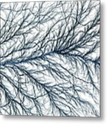Electrical Discharge Lichtenberg Figure Metal Print by Ted Kinsman