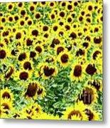 Field Of Sunflowers Metal Print