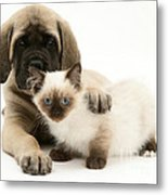 Puppy And Kitten Metal Print