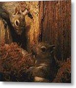 A A Baby Eastern Gray Squirrel Sciurus Metal Print
