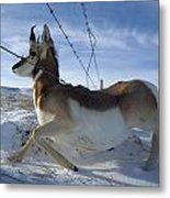 A Barbed Wire Fence Is An Obstacle Metal Print