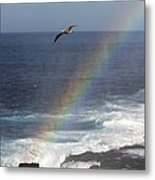 A Blue Footed Booby Soars Metal Print by Ralph Lee Hopkins