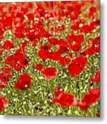 A Field Of Poppies Metal Print by Richard Nowitz