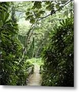 A Flooded Path At Manoa Falls Metal Print