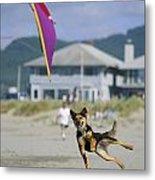 A German Shepherd Leaps For A Kite Metal Print
