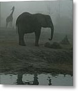 A Giraffe And Elephant Live In The Same Metal Print