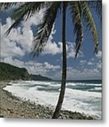 A Lone Palm Tree Grows From The Rocky Metal Print by Michael Melford