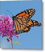 A Monarch Butterfly, Danaus Plexippus Metal Print by Darlyne A. Murawski