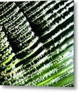 A Palmfrond Metal Print by Catherine Natalia  Roche