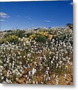 A Riot Of Wild Stock Flowers And Annual Metal Print