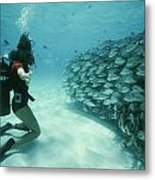 A School Of Grunts Swims By A Diver Metal Print