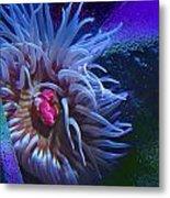 A Sea Anemone Metal Print