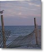 A Seagull Pauses Metal Print by Stacy Gold