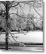 After The Ice Storm Metal Print by Lila Fisher-Wenzel