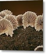 An Array Of Common Split Gill Mushrooms Metal Print by Darlyne A. Murawski