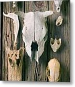 Animal Skulls Metal Print by Garry Gay