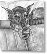 Are We There Yet - Doberman Pinscher Dog Print Metal Print