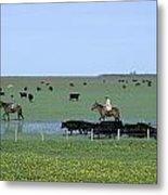 Argentine Gauchos, Or Cowboys, Herd Metal Print by James P. Blair