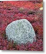 Autumn Blueberry Field Metal Print