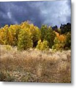 Autumn Meadow Metal Print by Carol Cavalaris