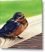 Baby Barn Swallow Metal Print by Peggy Dreher
