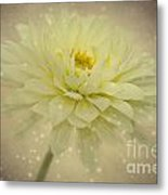 Be A Star Metal Print by Angela Doelling AD DESIGN Photo and PhotoArt