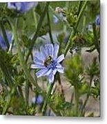 Bee On Romaine Flower Metal Print