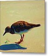 Bird On Daytona Beach Metal Print