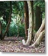 Bizarre Trees Metal Print by Angela Doelling AD DESIGN Photo and PhotoArt