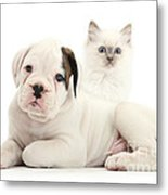 Boxer Puppy And Blue-point Kitten Metal Print