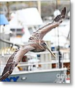 Brown Pelican . 7d8228 Metal Print
