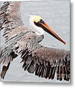 Brown Pelican . 7d8234 Metal Print by Wingsdomain Art and Photography