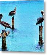 Brown Pelicans In Aruba Metal Print by Thomas R Fletcher
