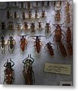 Bug Collector - So What's Bugging You Metal Print by Mike Savad