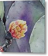 Cactus Bloom Metal Print by Regina Ammerman