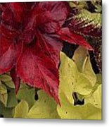 Coleus And Other Plants In A Window Box Metal Print