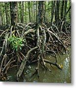 Detail Of Mangrove Roots At The Waters Metal Print by Tim Laman