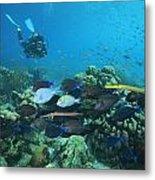 Diver Watching Blue Tangs, Doctorfish Metal Print by George Grall
