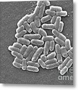 Escherichia Coli, Sem Metal Print by CDC/Science Source