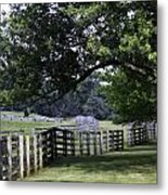 Farmland Shade Appomattox Virginia Metal Print