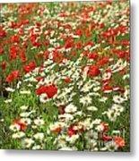 Field Of Daisies And Poppies. Metal Print by Bernard Jaubert