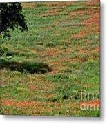Field Of Poppies. Metal Print