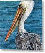Florida Pelican Metal Print by Peggy Dreher