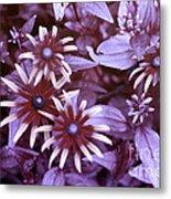Flower Rudbeckia Fulgida In Uv Light Metal Print by Ted Kinsman