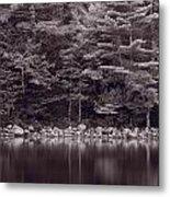 Forest At Jordan Pond Acadia Bw Metal Print
