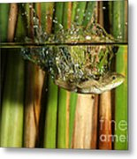 Frog Jumps Into Water Metal Print