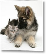 German Shepherd Dog Pup With A Tabby Metal Print