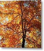 Glory Of Autumn Metal Print by Jennifer Compton
