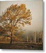 Golden Sunlit Tree With Mist, Yakima Metal Print